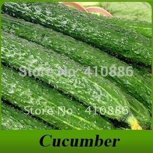 Brand Cucumber seeds 20 pcs free shipping, DIY Garden.