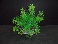 Free shipping aquarium decoration with 10pcs/bag