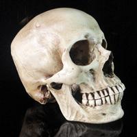 Free shippping--Prank / Medical Skull /Christmas gift