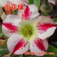 """5pcs/bag white adenium flower """"ManTingXiang"""" seeds DIY Home Garden"""