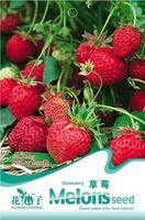 5 Pack 250 Seed Delicious Red Tender Sweet Juicy Inside Strawberry Seeds B003