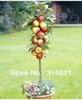 Free Shiping   Bonsai Apple Tree Seeds  (20 Pieces per bag)