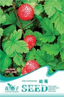 5 Pack 250 Seed Indian Mock Strawberry Seeds Fruit Seed B088