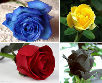 Free Shipping 160  Rose Seeds ,Mixed Order  8 Color Rose Seeds