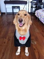 Wellsore clothes large dog clothes satsuma clothes wellsore clothing
