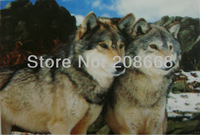 Item no.YX1011,3D picture,logo:2 lover wolfs are staring,size 25x35cm,never fade forever;50pcs/lot,free shipping;3D painting