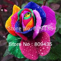 Free Shipping 400pcs of rainbow rose seeds