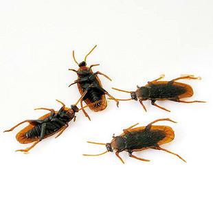 Life-like Fake Roach Blackbeetle Cockroach Trick joke toy
