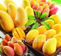 Free shipping mango/manga tree seeds* big moss mans seed*delicious fruit seeds*Mangifera indica Linn 5pcs