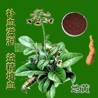 10pcs/bag Digitalis Seeds DIY Home Garden