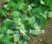 2.5M 60pcs artificial Grape leaves grape vine plants  vine leaves decoration rattan