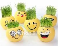 DIY 6pcs/Set Yellow Emotion Mini Novel Bonsai Grass Planters Face Plant Garden Wholesale