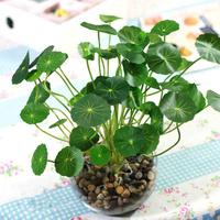 Artificial plants decoration flower bonsai artifical leaf home decoration green plant /grass