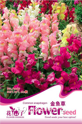 1Bag Snapdragon Seed 60 Flowers Seeds Antirrhinum Snapdragon Seeds Mixed Colors(China (Mainland))