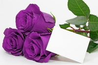 Free Shipping 100 Seeds China Rare Purple Rose Flower