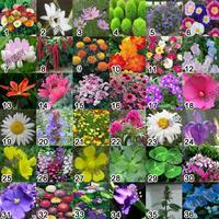 Flower seed set  include 40 kinds 2000pcs
