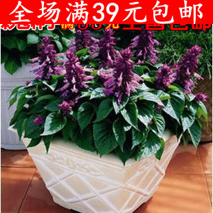 Free shipping Bag flower seeds bonsai flower bed 15 Promotion Offer(China (Mainland))