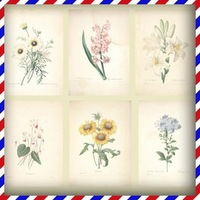 Free Shipping! Afternoon Garden Retro Elegant flowers and fruits of the Department of Botany 18pcs/set postcards handdrawing