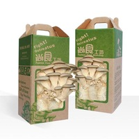 New arrival desktop pleurotus ostreatus mushroom plants magic