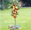 Free Shiping   Bonsai Apple Tree Seeds  (10 Pieces per bag)  PLUS MYSTERIOUS GIFT