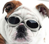 Free shipping Dog cool windproof glasses pet sun glasses windproof rainproof dog pet glasses