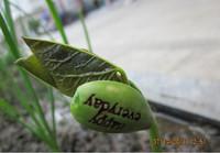 100Pcs/lot Novelty Items Magic Growing Message Beans Seeds Magic Bean White English Magic Bean Bonsai Green Home Decoration