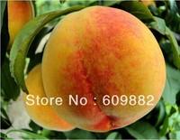 Карликовое дерево 1 organic packing big green balsam pear melon Seeds * 15+ pcs rare vegetable bitter gourd seed 60 days harvest