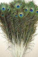 Wholesale Price! 200pcs/lot, length:25-30 cm,beautiful natural peacock feather!