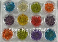multi 12 color lovely real natural babysbreath 3D dry flowers nail art Salon UV Gel Tips Manicure decorations wholesale