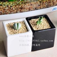 Home decoration ceramic vase flower pot decoration black and white mini bonsai