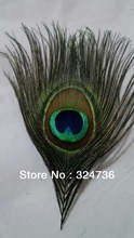 peacock tail feather reviews