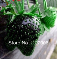 100 SEEDS BLACK STRAWBERRY SEEDS, BEST PRICE AND FREE SHIPPING * FRESH FRUIT SEEDS * NON-GMO VEGETABLE