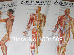 front &side&back 3pcs as one set chinese standard meridians acu-points acupoints chart acupuncture auricular acupoint chart map(China (Mainland))