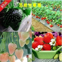 2015 new Free shipping 3 kinds strawberries seeds 100 white 100 black 100 red strawberry.Total 300 seeds