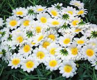 DIY manual white silk flower cloth flower chrysanthemum sunflower sunflower the Daisy simulation fake flowers flower heads