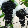 Free shipping  rare colorful grape 100 seeds fruit seeds black grape seed(China (Mainland))