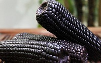 Waxy Corn Seeds Black Corn Seeds Vegetables Seed Home DIY 100Pcs/Bag