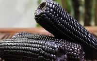 Waxy Corn Seeds Black Corn Seeds Vegetables Seed Home DIY 100Pcs/Bag