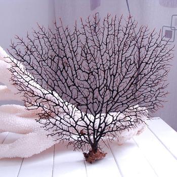11@ Medium sea cycas Juneberry natural coral conch shell fish tank piaochuang decoration 1