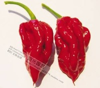 F31 1 pepper seeds new world new arrival super chili