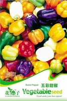 1 Pack 20 Seeds Sweet Pepper Seed Colorful Ornamental Pepper Seed Hot Seed  C024