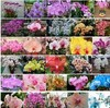 Min.order is $7.99 (mix order) 10 Packs Butterfly Orchid Flower Seeds Phalaenopsis amabilis 100 pcs/lot mix-colors  A++