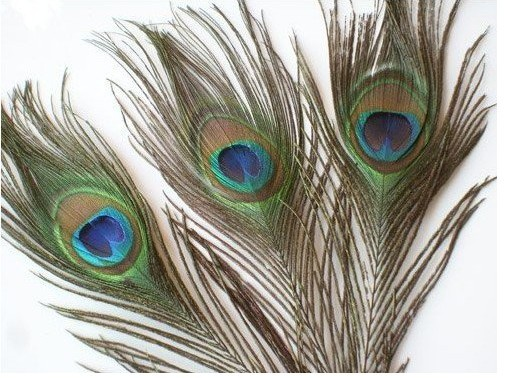 wholesale Top quality peacock feather,length about 30 cm,beautiful natural peacock feather big Eyes 10-12 inch 200pcs/lot(China (Mainland))
