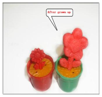 2013 Magic Plants Flower Growing Pet No Animal Novelty Gags & Practical Jokes Birthday Gift Kids Adult Wacky Toy