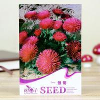 Bag flower seeds - daisy flowers seeds balcony bonsai flower seeds