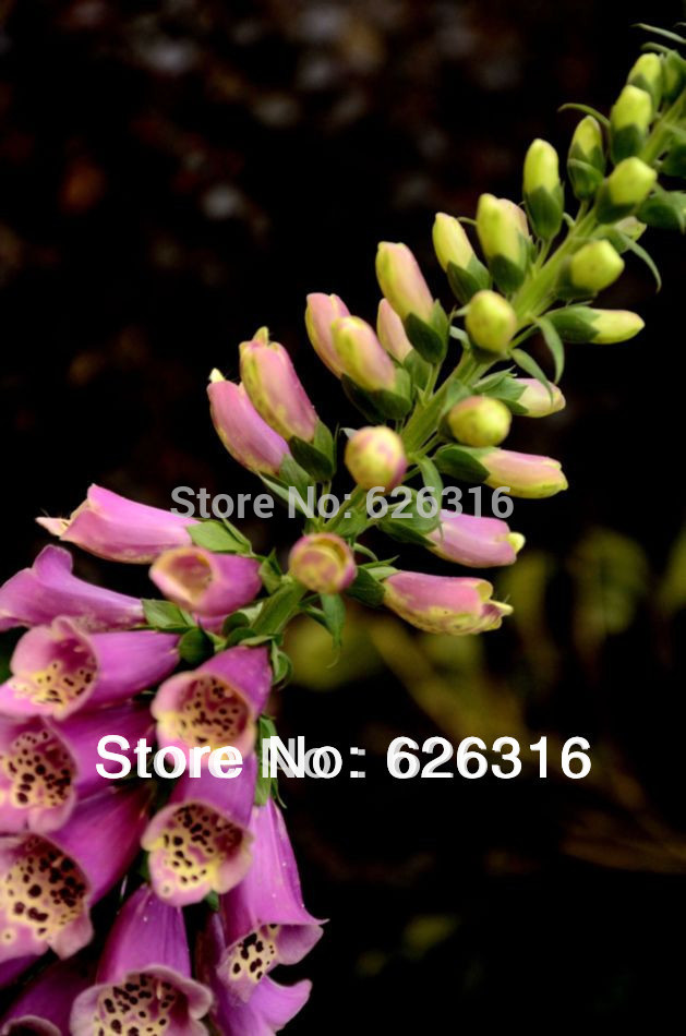 Карликовое дерево 150pcs/diy карликовое дерево china seeds dionaea muscipula