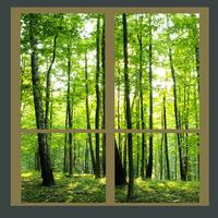 Glass film no . 65097 glass film scrub the tree
