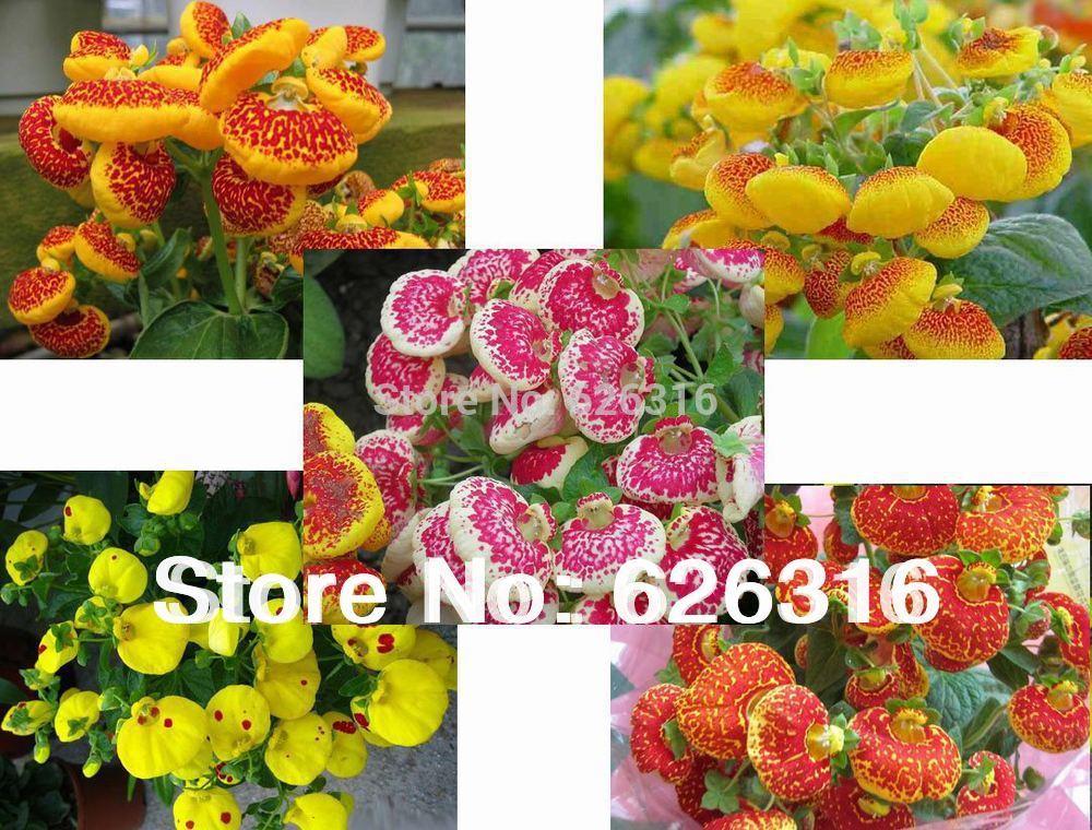 Flower Plants For Home Garden Flower Plant Garden Bonsai