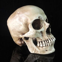18cm Huge novel human resine skull cranium Skull Heads CrossBones Skullcandy model for friend gift research party