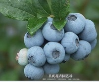 100pcs 2014 new 50 SEEDS Elizabeth blueberry seeds blackberry seeds Planters bonsai seeds FREE SHIPPING
